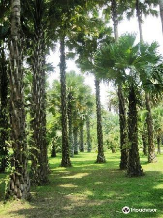 Xishuangbanna Rainforest Valley2
