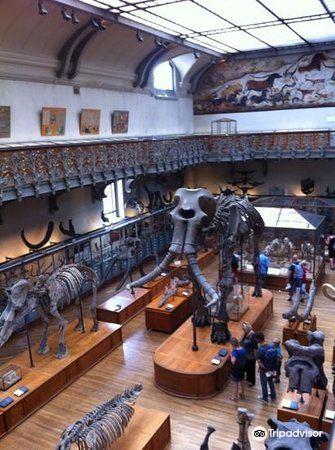 進化大陳列館3