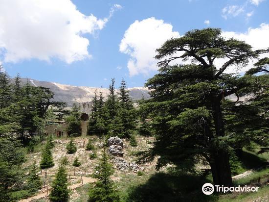 The Cedars of God2