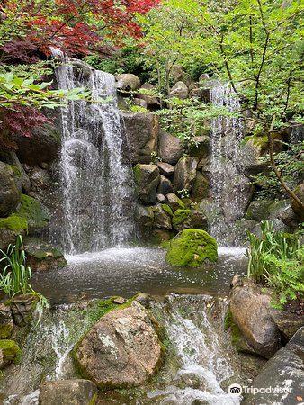 Anderson Japanese Gardens2