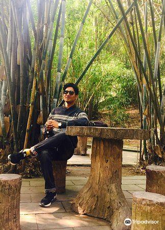 Qixingshan Forest Park2