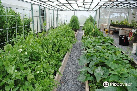 Kupa'a Farms3