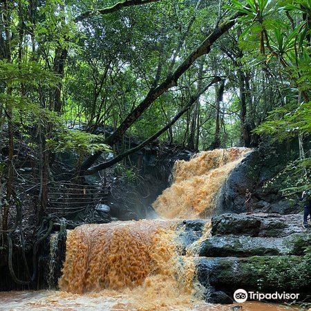 Karura Forest2