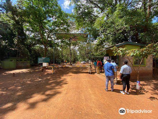 Karura Forest4