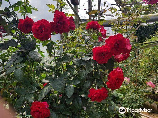 玫瑰山莊3