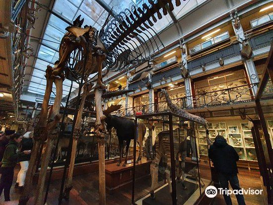 National Museum of Ireland - Natural History2
