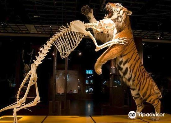 Naturhistorisk Museum1