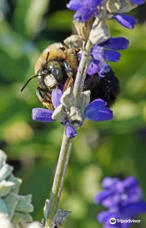 Mineola Nature Preserve4