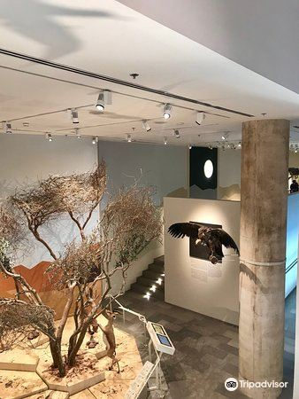 The Steinhardt Museum of Natural History4