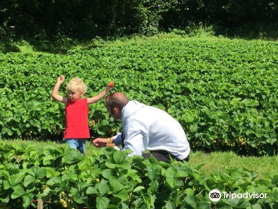 Hendrewennol Fruit Garden4