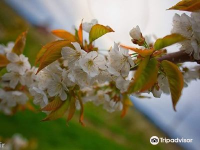Kempf Orchards