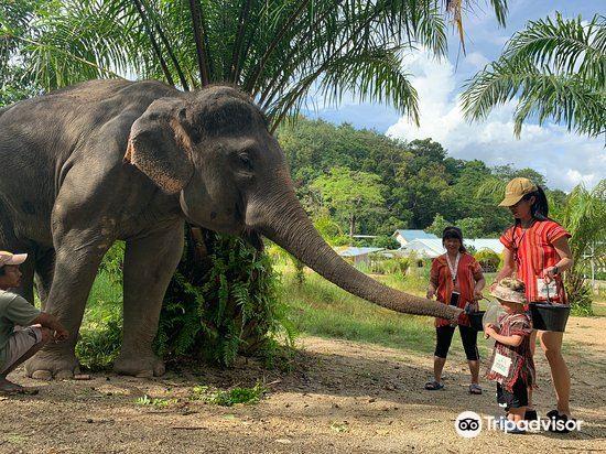 Elephant Care Park Phuket