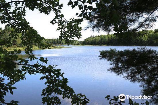 Irishtown Nature Park3