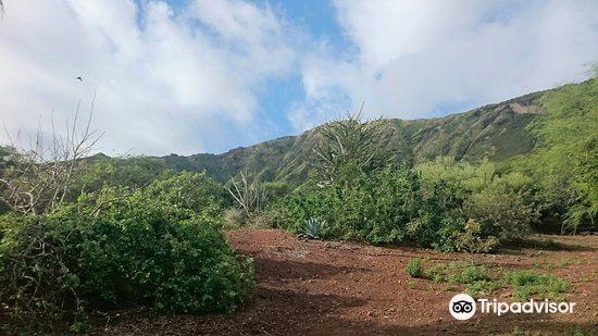 可可火山口植物園3