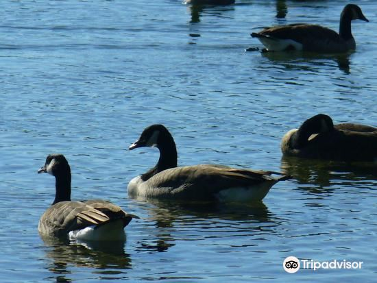 Elk Lake Park2