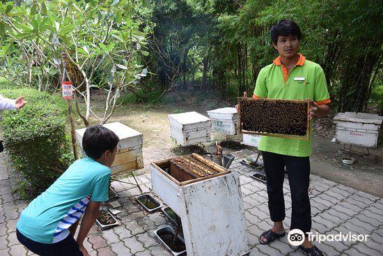Big Bee Farm4
