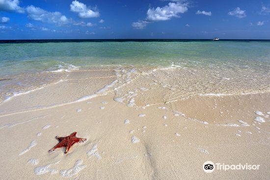 Starfish Point4