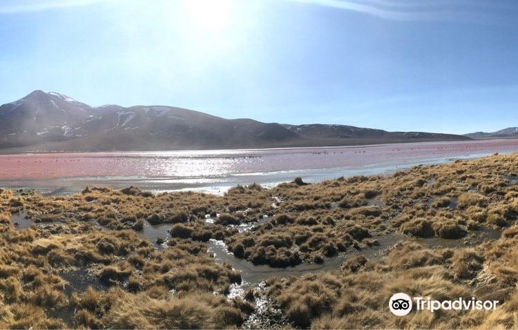 Laguna Colorada2