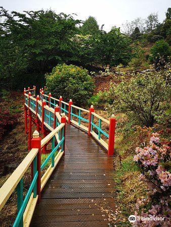 Emu Valley Rhododendron Garden4