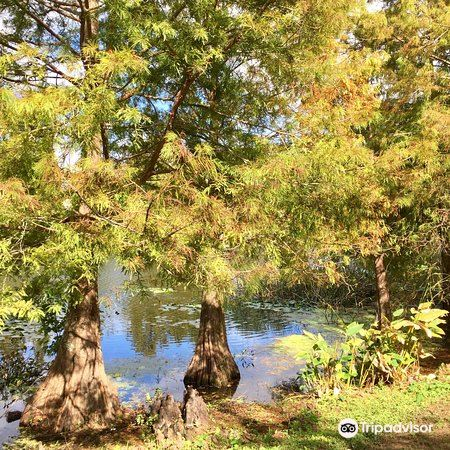 Greenwood Urban Wetlands4