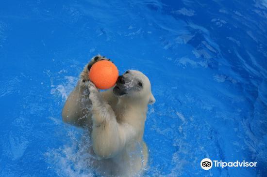 熊本市動植物園2