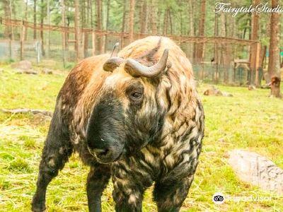 塔金動物園