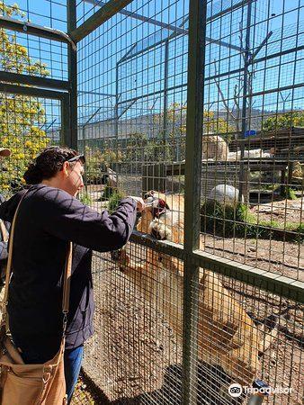 Zoodoo Wildlife Park2