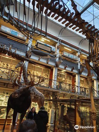 National Museum of Ireland - Natural History4