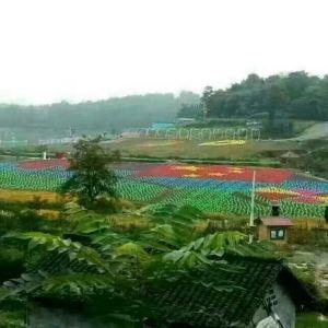 凤凰塘桥香薰山谷旅游景点攻略图