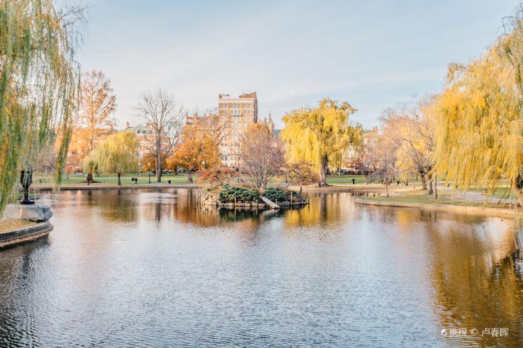波士頓公共花園3