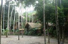 丛林中的村落 黎族村落