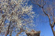 赏花季-颐和园的桃花&云南罗平油菜花