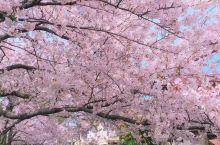 旅行73国之---日本