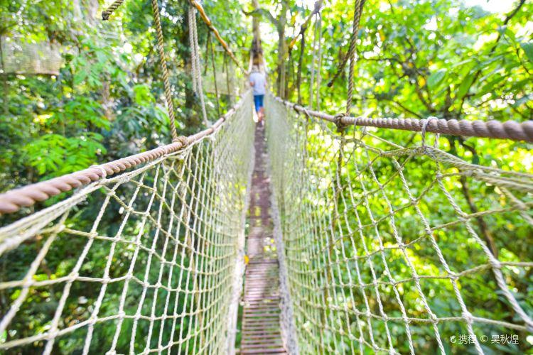 Xishuangbanna Tropical Rainforest National Park Wangtianshu Scenic Area3