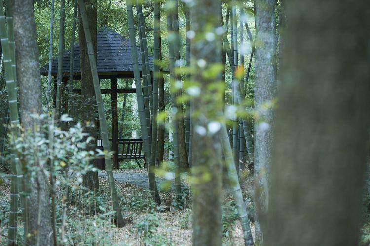 Yaolin National Forest Park4