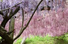 紫藤萝迷宫