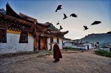 郎木寺和喇嘛一起喂鸽子
