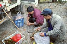 剑川~石龙村菌子交易市场