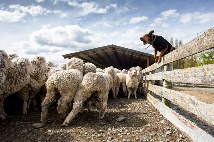 Mount Nicholas Farm Experience1