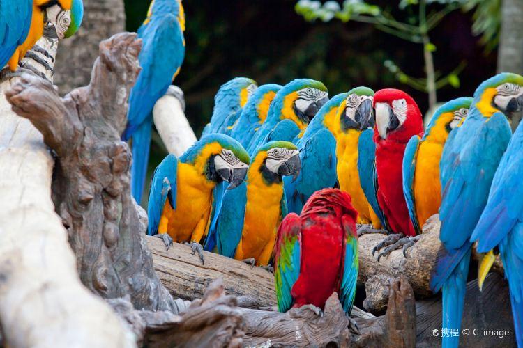 Jurong Bird Park2