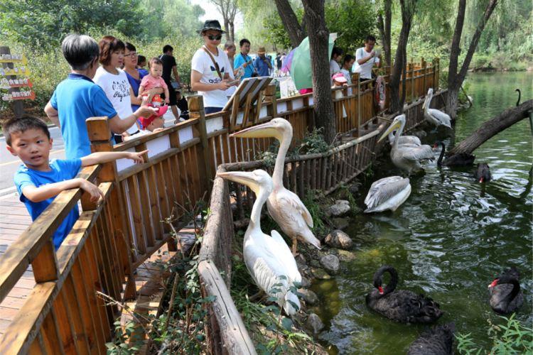 Jinan Wildlife World1