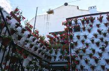 """还有不到1个月,这个西班牙南部小镇将变成一座芳香浓郁的""""鲜花之城""""!"""