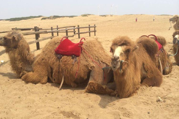 허우톈사막2