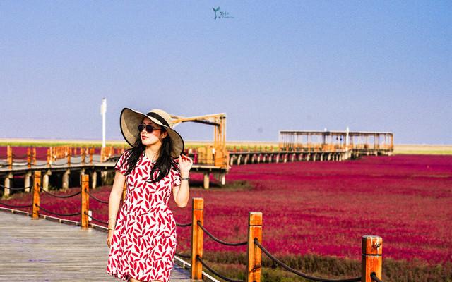 天下奇观红海滩:地球上唯一的红色海岸,今秋国庆带她去赴最美的血色浪漫