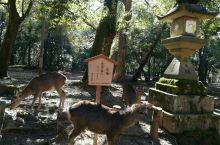 奈良公园嬉鹿记