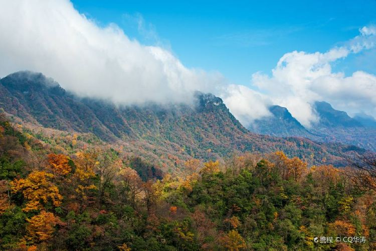 Micang Mountain National Forest Park4