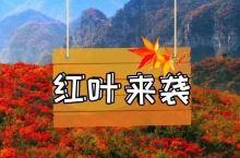 比香山红叶更美!郑州周边这8个红叶圣地你去过几个?