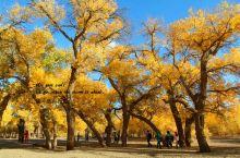 大漠胡杨,释放出所有的生命激情,给人以心灵上的震撼。