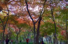 满天红叶——红叶谷