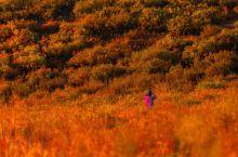 【面の旅行】国内最美风景-一年四季都美的新疆